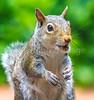 Backyard animals - May 2014-0005 - 72 ppi