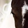 Horse mare Saskatchewan Field