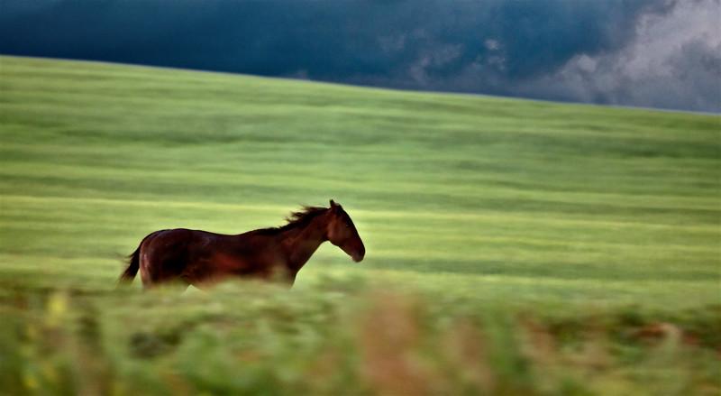 Horses Pasture Blurred