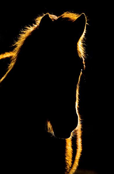 Sunset Horse Silhouette Canada