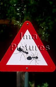 1-31-35-0099 formicidae,ant,mier,fourmi
