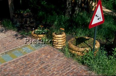 1-31-35-0101 formicidae,ant,mier,fourmi