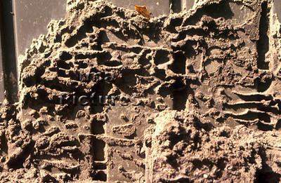 1-31-35-0299 formicidae,ant,mier,fourmi