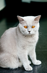 cat,kat,chat