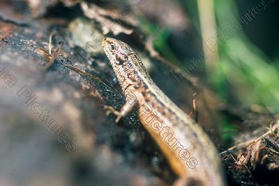 reptielia,reptile,reptielen,