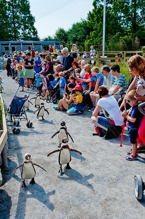Zoo dierentuin