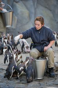 pinguin area,verblijf,pinguinarium,Zoo Planckendael,Belgium,België,Belgique