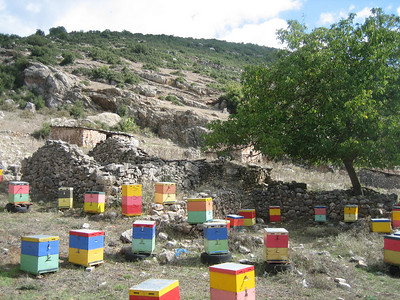 Beehives (near Spilia)