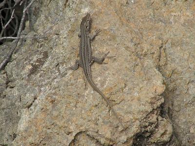(along TF 38, between Las Cañadas and Chio, western Tenerife)