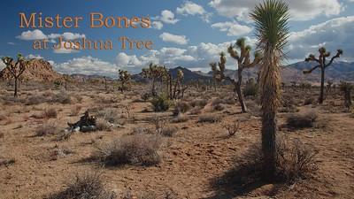 Mister Bones at Joshua Tree