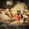 Dog and Fairy