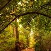 Autumn Arch