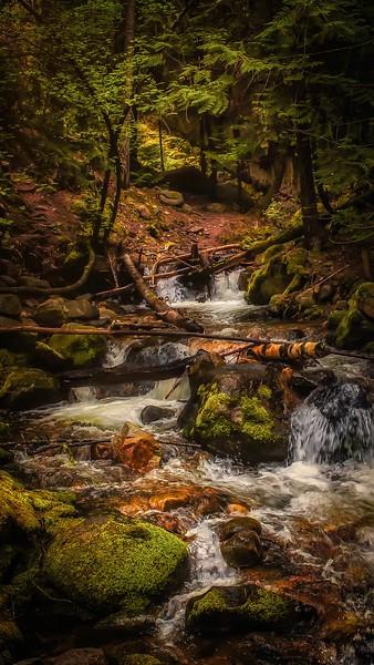 Tulip Creek 1Z