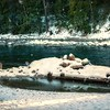 Snow on Slocan River