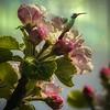 Aurora Blossoms