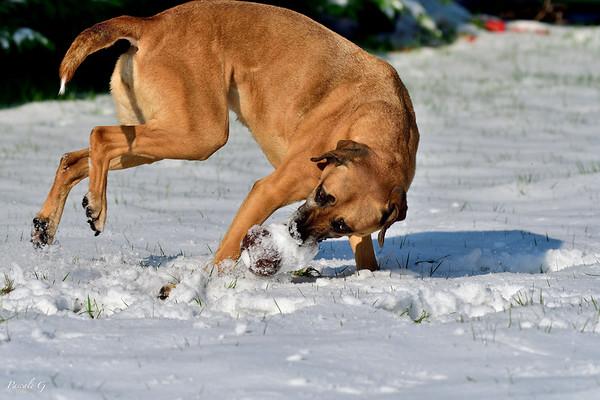 Thalie and snow ! Thalie et la neige !