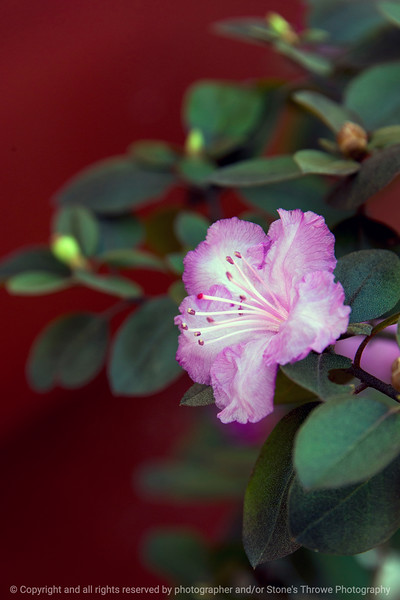 015-flower-ankeny-11apr17-12x18-004-8261