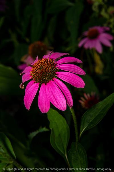 015-flower-ankeny-11jul20-08x12-008-400-7204