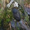 Autumn Walk in Thornley Woods and Derwenthaugh Park