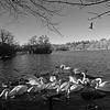 Bolam Lake, nr Ponteland in Northumberland