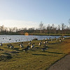 Hardwick Park nr Sedgefield Jan 2018