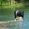 National Trust Tarn How
