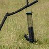 National Trust Gibside a Woodpecker