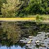 Washington Riverside and James Steel Park