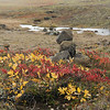 Typical vegetation in Iceland   Cairns are built using the volcanic rock