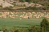 Aragon, Hecho Valley