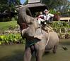 Elephant Camp (1)