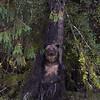 Rubbing on a Tree