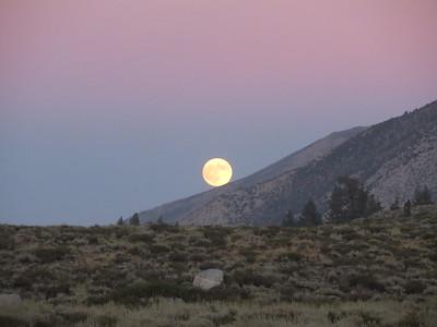 Kathleen:Purple:Moonrise