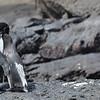 Isn't love grand in Galapagos