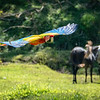Macaw In Flight