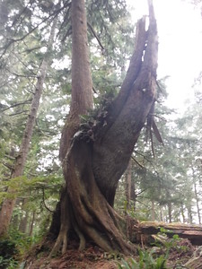 I liked how these two trees embraced each other.  Almost at the beach now, I can hear it!