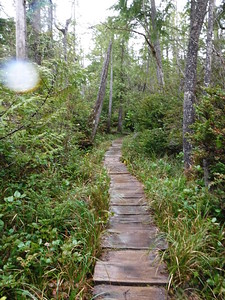 Most of the trail was actually an elevated walkway, which shows impressive workmanship on the part of the Olympic National Park staff!