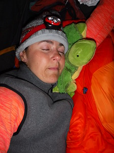 Little turtle pillow says hi