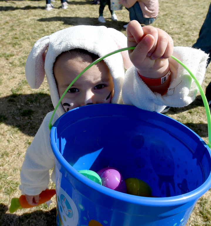 . Dillon Reed, 2, comes out of the egg scrum with plenty of eggs at during the 8th Annual White Fields Community Church Easter Egg Hunt at Roosevelt Park in Longmont on Saturday. Cliff Grassmick  Photographer  March 31, 2018