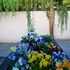 backyard, flowers, 2002