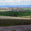 Rogue Valley - Orchards and Vineyards