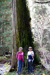 Ross Creek Cedars