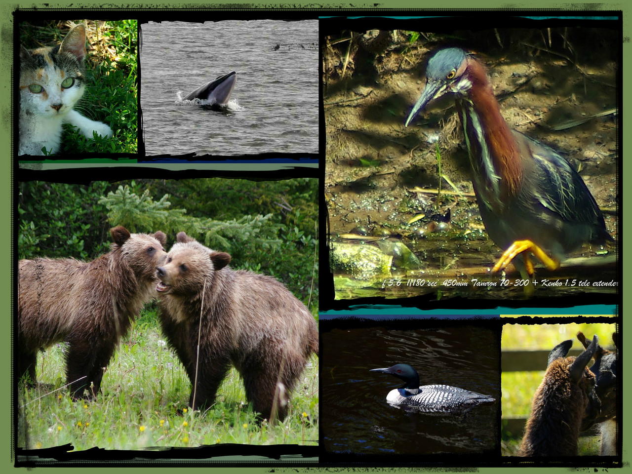 ANIMAL SIGHTINGS ARE A PART OF EVERY TRIP HOPEFULLY