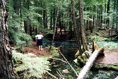 Ross Creek Cedars