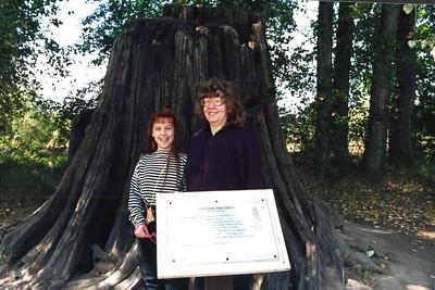 Hobo Cedar Grove Botanical Area -1991