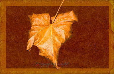Leather Leaf