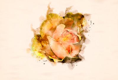 Rustic Rose 2