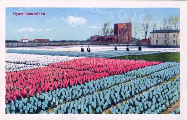 An0085 <br /> De ruïne van Teijlingen, gezien vanaf de Frank van Borselenlaan (de Puk). In het midden is de achterkant van de ruïne te zien en rechts vermoedelijk een bollenschuur. Foto: tussen 1910-1920