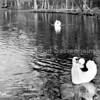 An0059 <br /> Een beeld van het park zoals het geweest is. De kinderboerderij was er nog niet. Let op de nestkorf voor de eenden. Foto: jaren '50.