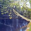 An0041 <br /> Park Rusthoff, het voormalige landgoed van de familie Charbon. Sinds 1917 eigendom van de gemeente Sassenheim en ingericht als wandelpark. Foto: 1977.